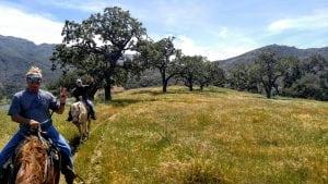 Trail Ride at Alisal Ranch