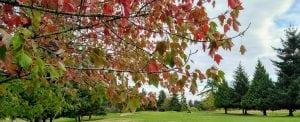 Fairwinds Golf Club, Vancouver Island BC